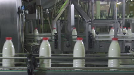 Dairy Plant. Conveyor with milk bottles. Dostupné videozáznamy