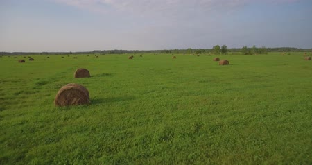 bales : Field of large hay bales, low flying aerial