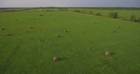тюк : Huge field with hay bales, aerial the rising up Стоковые видеозаписи