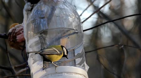 alimentador : Titmouse fly into the bird feeder and fly away in slow motion.