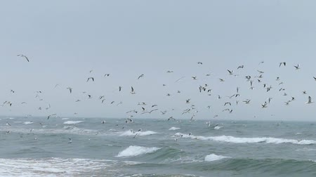 wild bird : The flock of seagulls flying in the sky in slow motion.