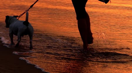 atividades : Dog on Leash Walks Along the Beach at Sunset. the Action in Real Time. Stock Footage