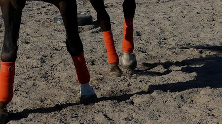 horse racing : Legs of Riding Horse in Slow Motion.