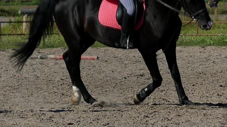 horse racing : Legs of Riding Horse in Slow Motion. Close up Shot.