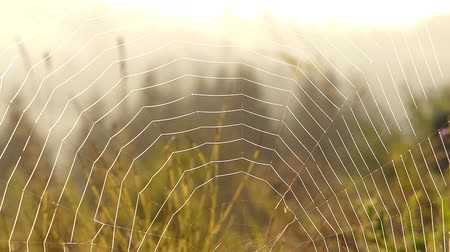 napfény : Spider Web in Sun Light. Close up in the Windy Weather.