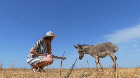 impressive skyline : Small donkey is fed by a young woman in summer in slo-mo