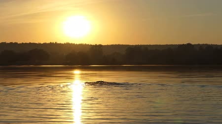 kapakları : Sportive man swims backstroke in a lake at sunset in slo-mo