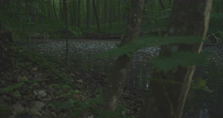 mysticism : 4K - A lake in a quiet morning forest, slow motion
