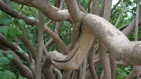 kötött : Branching on the tree Stock mozgókép