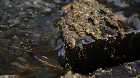 runoff water : Water and leaves drain into the manhole - close up shot in slow motion. Stock Footage