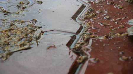 bruk : Raindrops fall on the tile on the street. Shot close-up in slow motion.