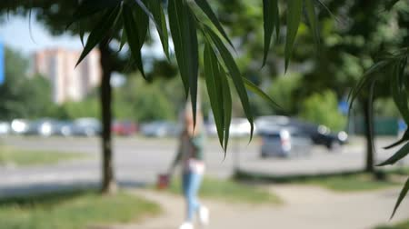 weeping : Girl walks on the street on background and leaves of willow on foreground
