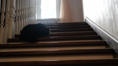 soglia : Black cat have a rest on the step of the house. Filmati Stock