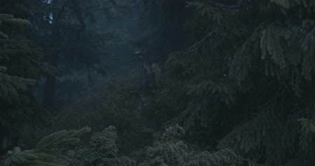 tuskó : Crow sitting on a stump of a broken tree in the Carpathians in slo-mo Stock mozgókép