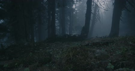 gerekçesiyle : Gloomy spruce wood covered with snaky roots and high trees in the Carpathians