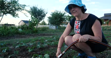 regadora : Woman in panama sitting and watering marrows in a garden in summer in slo-mo