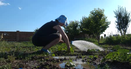 watering can : Cheery woman in panama sitting and watering marrows in her garden in slo-mo
