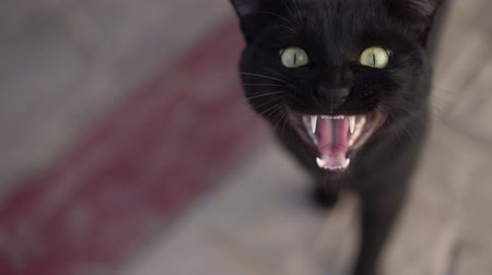 клык : A black cat says meow so his jaw is visible in slow motion