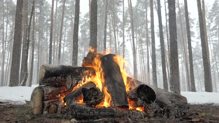 захватывающий : Wild camp fire from big logs in winter forest under falling snow