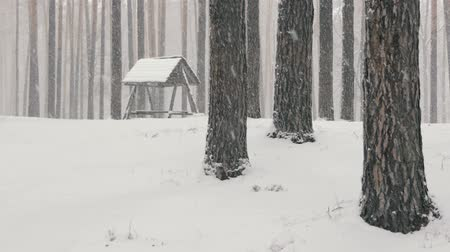 karmnik : Sparkling snowfall in a pine forest with a bird feeder in winter