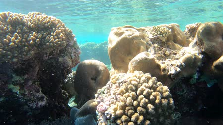 coral triangle : Surface of water in the red sea.