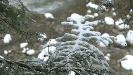 бросаясь : Snowflakes falling on a rushing runlet in the Carpathians in winter in slo-mo