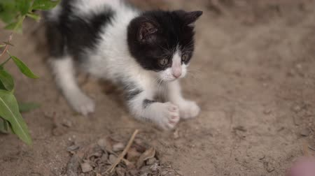 závity : Cute little black and white kitty play in the street in slow motion.