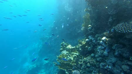 derinlik : Coral reef with a lot of fish in slow motion. Stok Video