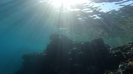 uw : Amazing coral reef underwater in sunrays in slow motion. Stock Footage