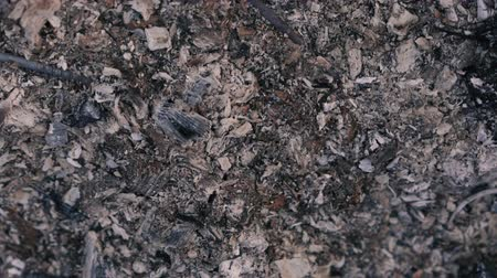after fire : The texture of the ashes after a fire in slow motion. Stock Footage