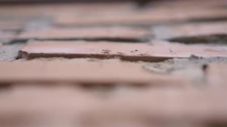 bağ : Red brick texture closeup in slow motion. Stok Video