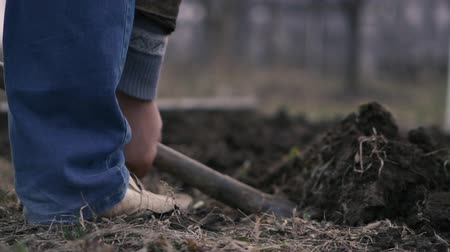 dacha : A mans leg in blue jeans is digging a shovel in the ground.