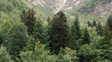 lodge : 4k - flight of the copter over the tops of fir trees in the Caucasus Mountains
