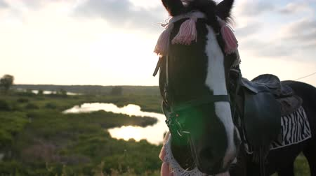 dizgin : A muzzle of an ornate horse close up at sunset in slow motion Stok Video