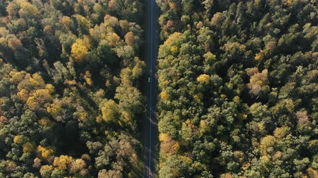 frondoso : Aerial shot of the thin highway in the Carpathian Mountains forest in summer