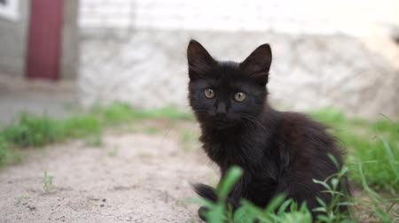 inspirar : Fluffy black kitten sitting and licking its lips in a yard on a sunny day in slo-mo Stock Footage