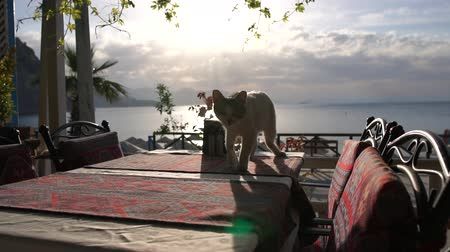 столовая гора : White cat on a table of a cafe terrace near the sea in slow motion Стоковые видеозаписи
