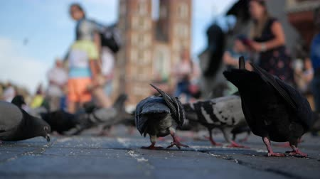 optimistický : Many doves and a kid with knight toys standing among them in Krakow in slo-mo