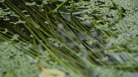 водохранилище : Abstract action - plants on the background of the pond in slow motion Стоковые видеозаписи