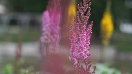 floweret : Pink flowers close-up in the park in slow motion Stock Footage