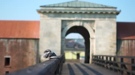 hírnök : The gate and bridge to the old city near which pigeons fly. Stock mozgókép