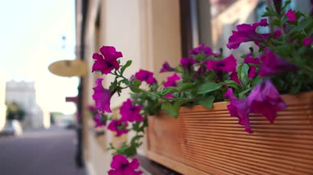 Outside the window are beautiful purple flowers Stock mozgókép