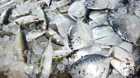 fish eye : Fresh fish in ice on farm market. 4K footage Stock Footage