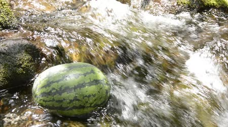 napfény : Watermelon cooling in fast flowing of sunlight shining brook Stock mozgókép