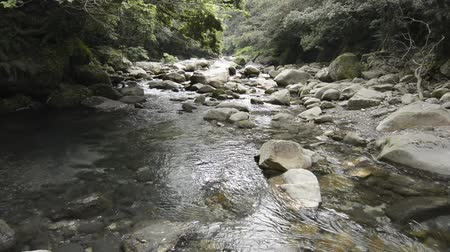 laur : Brook gently flowing after passing through among stones under laurel forest