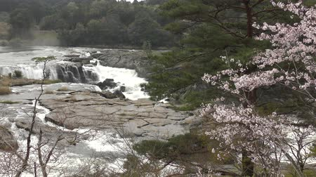 yoshino river : Sogi waterfall and cherry blossoms in Kagoshima