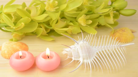 caracol : Venus comb murex and pink candles in front of orchid flowers on wood table
