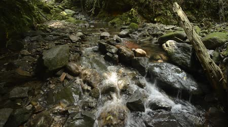 текущий : Ravine flowing thin brook on stones beside fallen trees