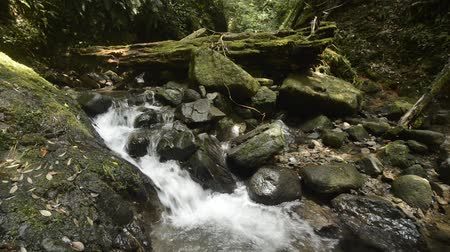 Ravine flowing brook beside various sizes mossy stones and fallen trees in Kagoshima