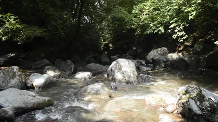 Thin brook flowing with lot of stones in front of green forest in Miyazaki Stock Footage